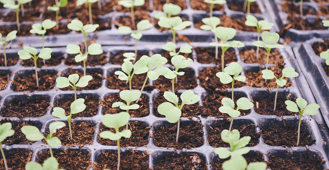 How to Make Your Startup Sustainable: Invest in Your Team